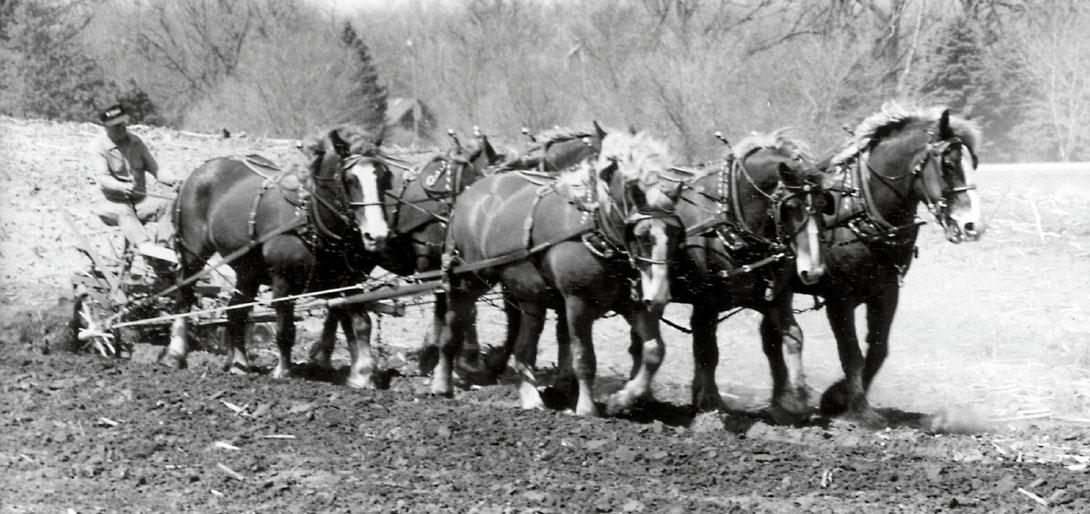Art of Working Horses